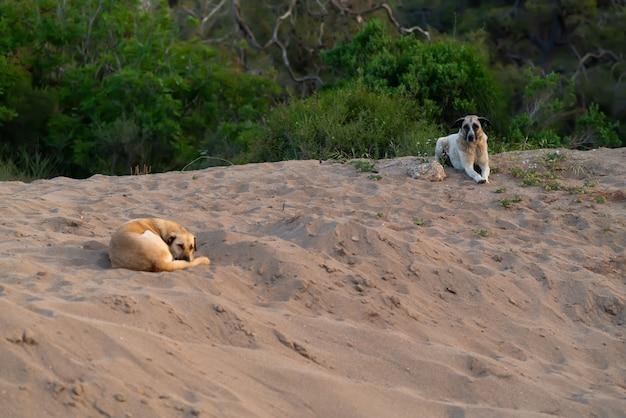 Gehoorzame honden liggen te wachten op hun baasje op een zandstrand
