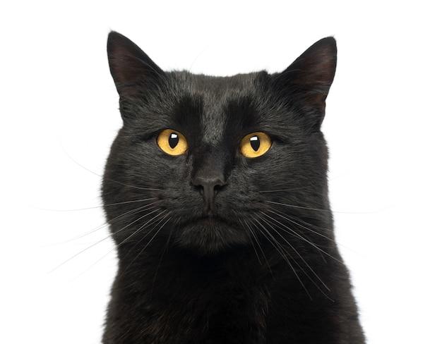 Geïsoleerd close-up van een zwarte kat