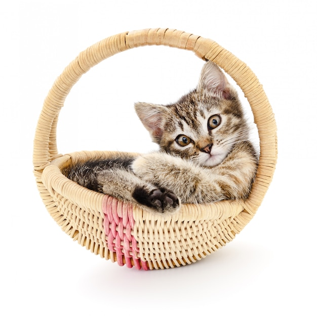 Geïsoleerd katje in mand