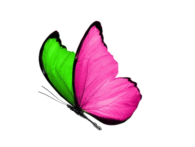 Geïsoleerd op witte achtergrond vliegende vlinder met roze en groene vleugels