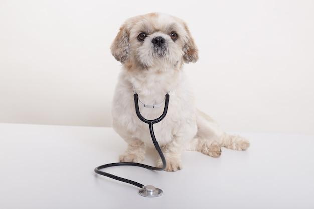 Geïsoleerd portret van dierenarts pekingese hond
