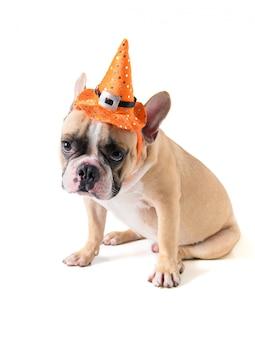 Geïsoleerd portret van leuke franse buldog met hoed halloween