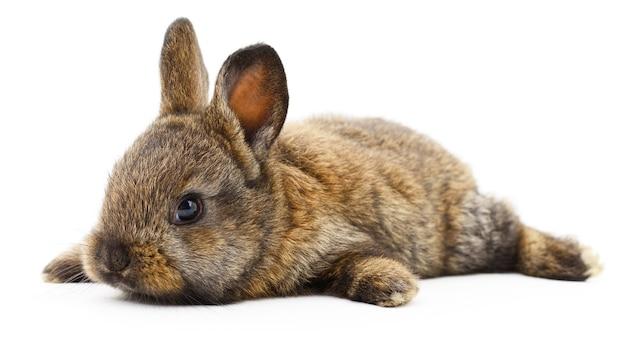 Geïsoleerde afbeelding van een bruin konijn Premium Foto