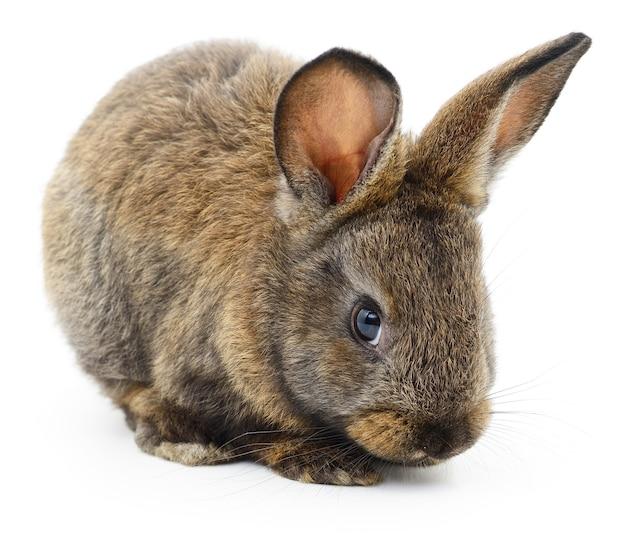 Geïsoleerde afbeelding van een bruin konijn
