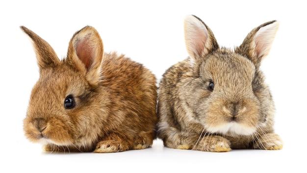 Geïsoleerde afbeelding van twee konijnen