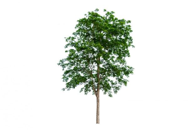Geïsoleerde bomen geïsoleerd