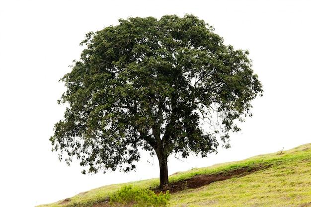 Geïsoleerde boom in een hellingsgrasgrond