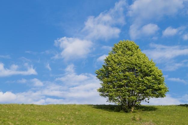Geïsoleerde boom op blauwe hemel. lente seizoen achtergrond. natuur landschap