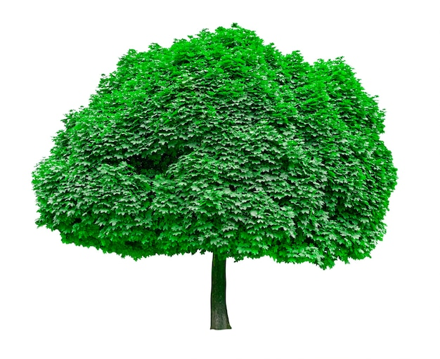 Geïsoleerde boom op het wit
