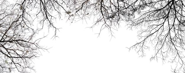Geïsoleerde boom op wit