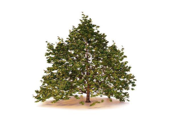 Geïsoleerde enkele boom op witte backgroundwith uitknippad
