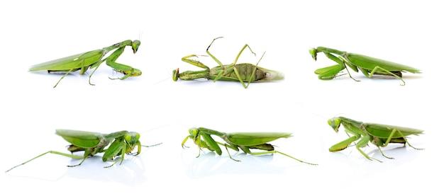 Geïsoleerde groep groene bidsprinkhanen. insect. dieren.