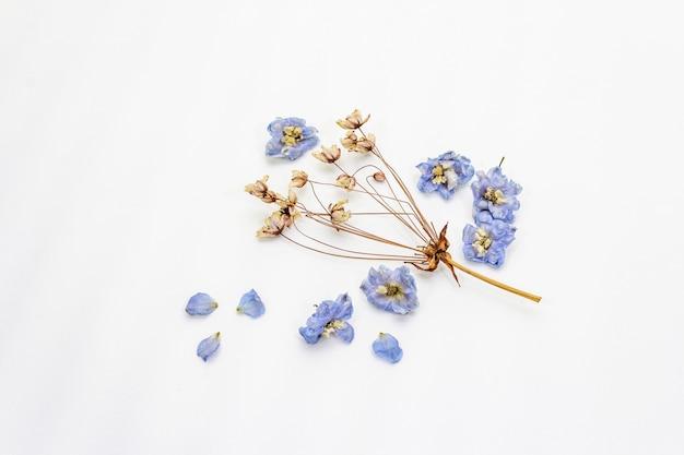 Geïsoleerde samenstelling van droge bloemen. delphinium en kers