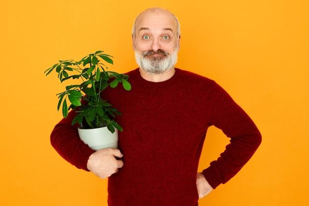 Geïsoleerde schot van gelukkig aantrekkelijke bebaarde oudere man poseren geïsoleerd houden bloempot onder zijn arm. knap europees mannetje dat bij pensionering voor kamerplanten zorgt.