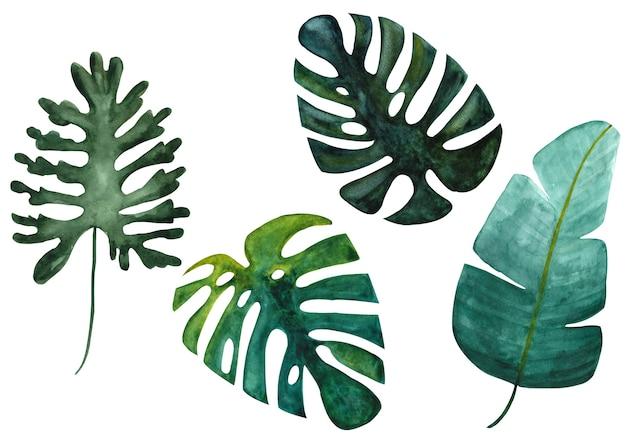 Geïsoleerde tropische groene monstera banaan en split bladeren op witte achtergrond set hand getrokken aquarel illustratie design met exotische planten is perfect voor textiel print webdesign kaart