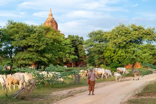 Geiten in bagan, myanmar land