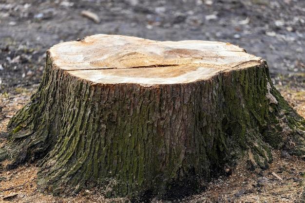 Gekapte boomstronk in het park close-up. hoge kwaliteit foto