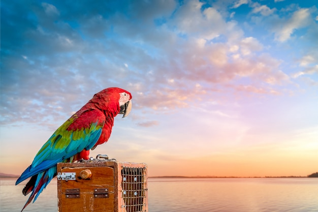 Geketende papegaai op zoek naar vrijheid.