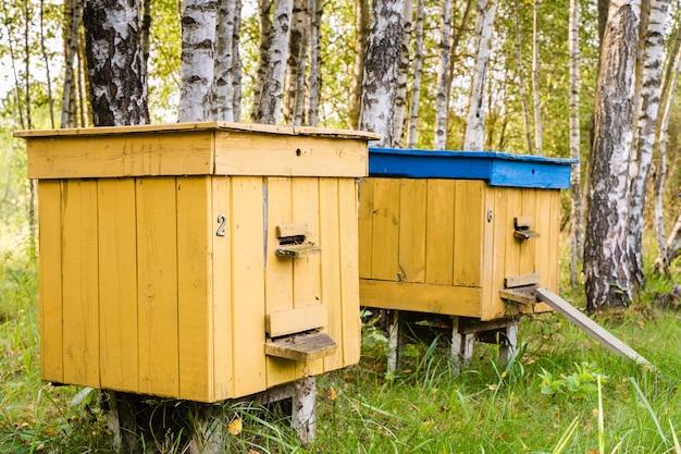 Gekleurde bijenkorven in de bijenstal in het bos op warme zonnige dag. stock foto