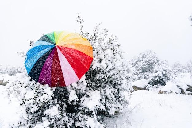 Gekleurde paraplu achtergelaten in een boom tijdens een sneeuwval.