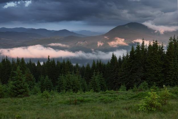Gekleurde zonsopgang in beboste berghelling met mist. nevelig karpatenlandschap