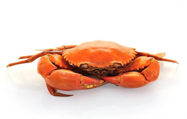 Gekookte krabben op witte muur
