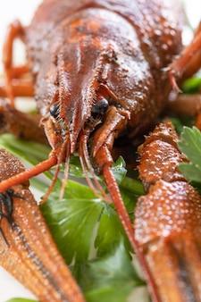 Gekookte langoesten van dichtbij en peterseliebladeren voorgerechtproteïne