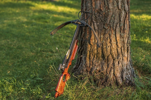Geladen kruisboog staat bij de boomstam.