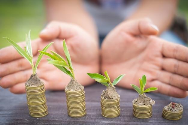 Geld groeiend concept, bedrijfssuccesconcept, boom het groeien op stapel van muntstukkengeld
