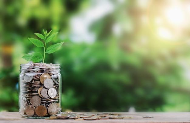 Geld met plant groeit op munt in jar financiën concept