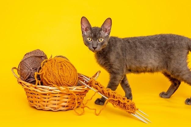 Gele achtergrond is een mand met wollen draden om te breien, begonnen met breien op naalden en een grijze kat
