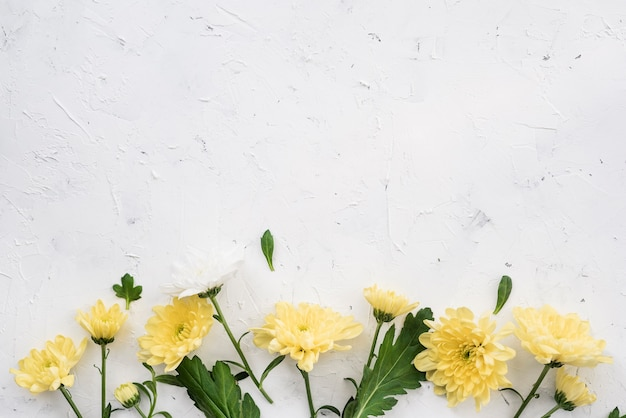 Gele anjerbloemen en exemplaarruimte