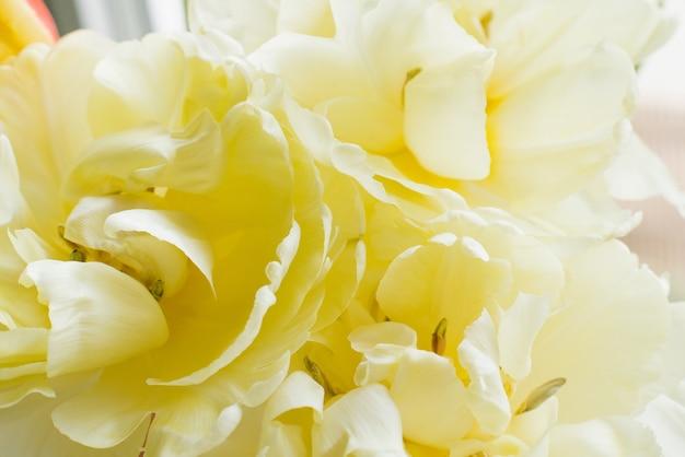 Gele badstof lente tulpen close-up. bloemenachtergrond voor exemplaarruimte
