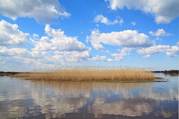 Gele band van het riet op het meer
