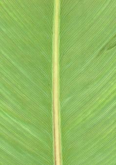 Gele bladader