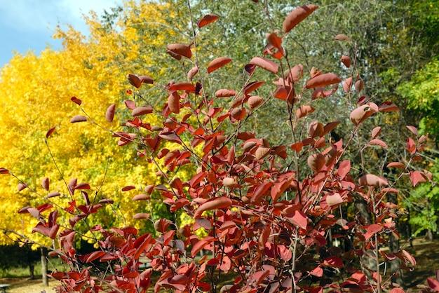 Gele bladeren aan herfstbomen tegen de blauwe lucht