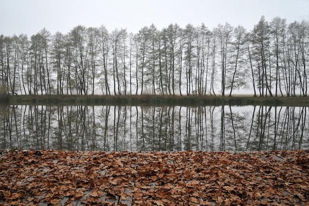 Gele bladeren door een rivier, bomen en mist