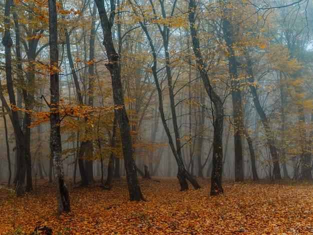 Gele bladeren herfst bos natuur frisse lucht hoge bomen