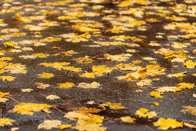 Gele bladeren in het park op asfalt