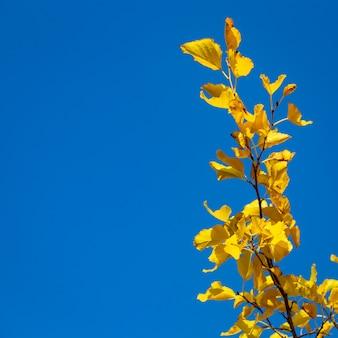Gele bladeren op een achtergrond van blauwe hemel