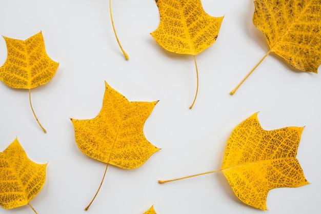 Gele bladeren op witte achtergrond