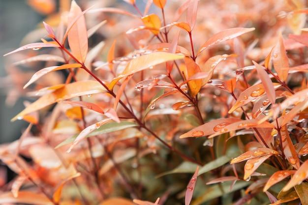 Gele bladeren textuur met regen water druppels herfstbladeren