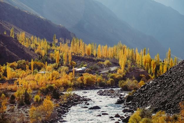 Gele bladerenbomen in de herfstseizoen langs bergketen