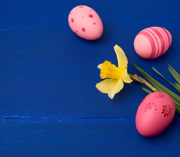 Gele bloeiende gele narcis en pasen roze eieren op blauwe houten achtergrond