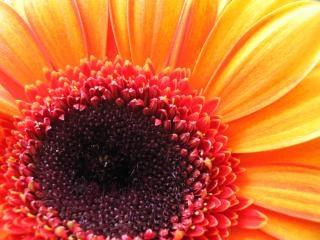 Gele bloem, bspo06