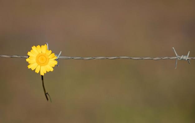 Gele bloem die op een draadomheining houdt