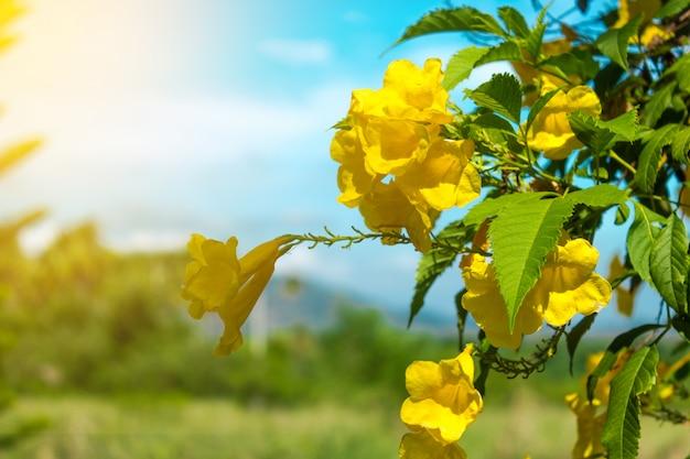 Gele bloem en zonlicht met blauwe hemel.