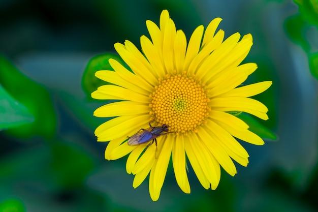Gele bloem in groen gras