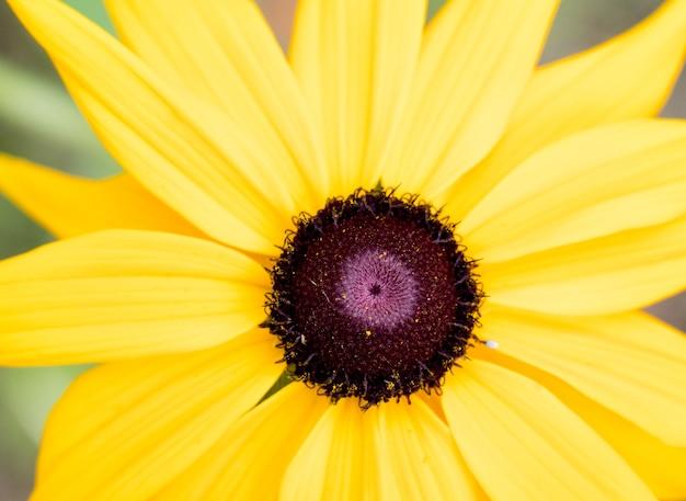Gele bloem macro-opname