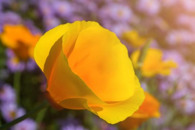 Gele bloem met brede bloemblaadjes tegen een achtergrond van blauwe bloemen